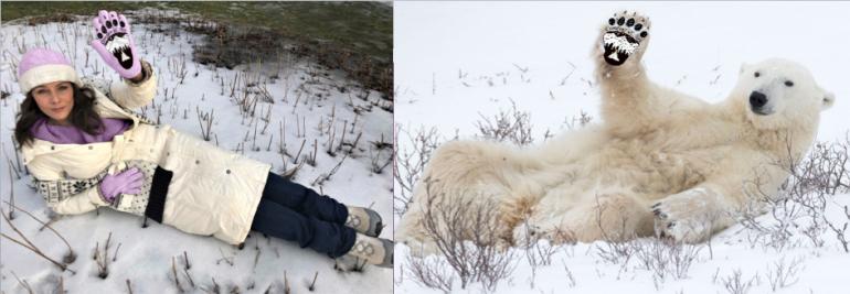 Polar Bear Collage G