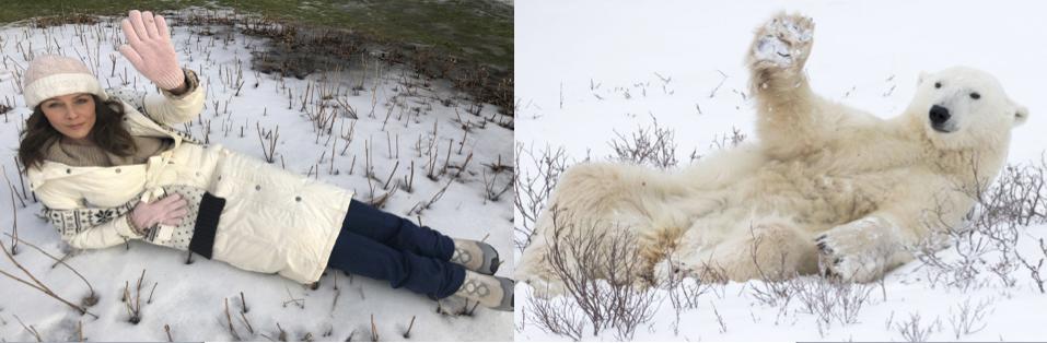 Polar bear Collage A