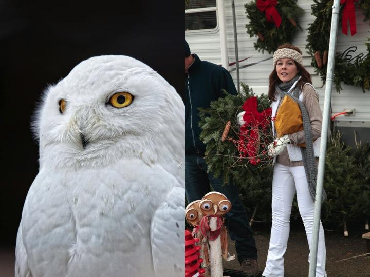 Snow owl CollageA
