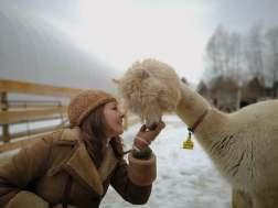 alpaca white & 3cstyle_n