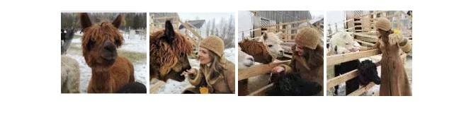 alpacas photo collage
