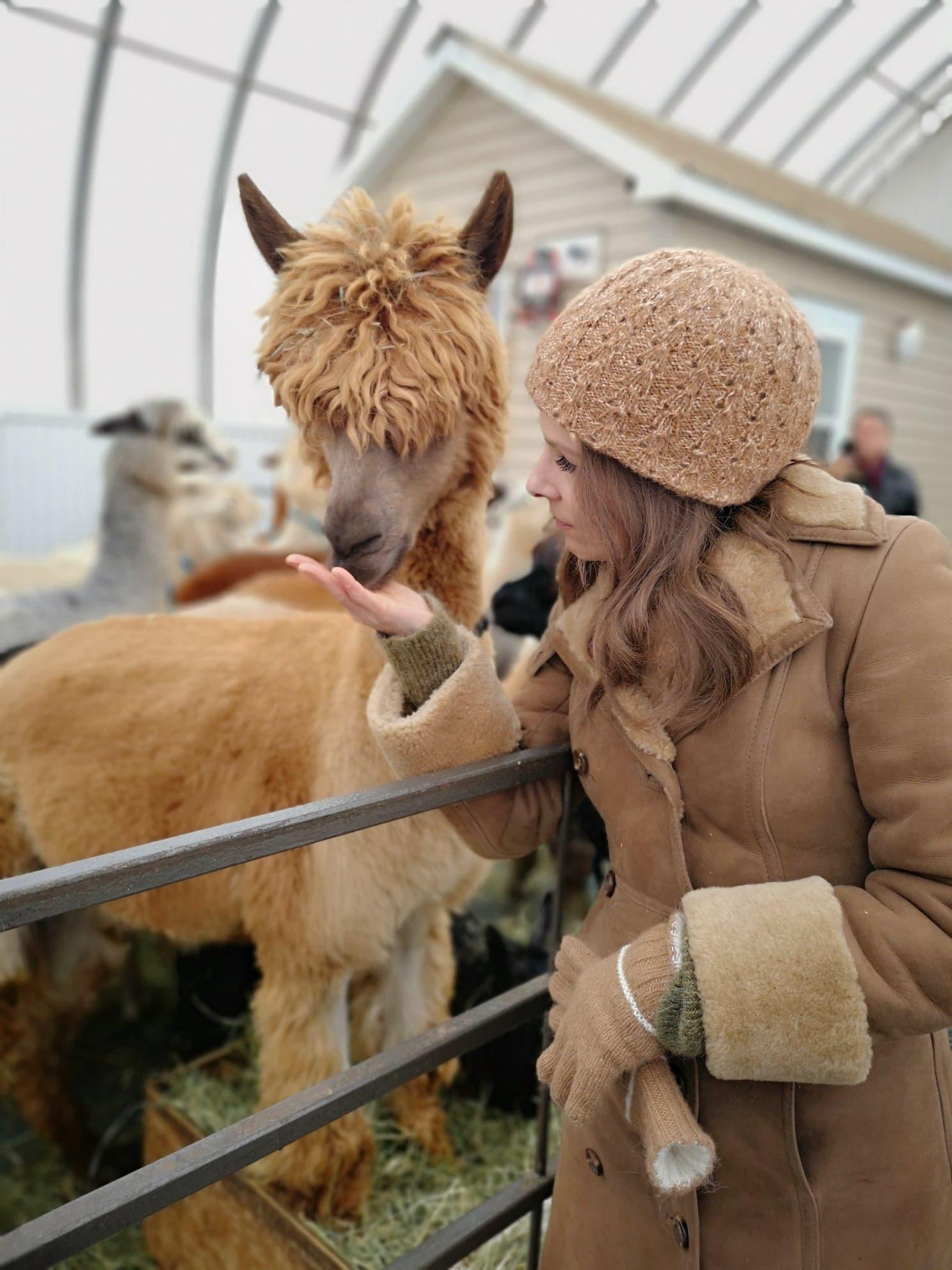 alpacas rust wfnc