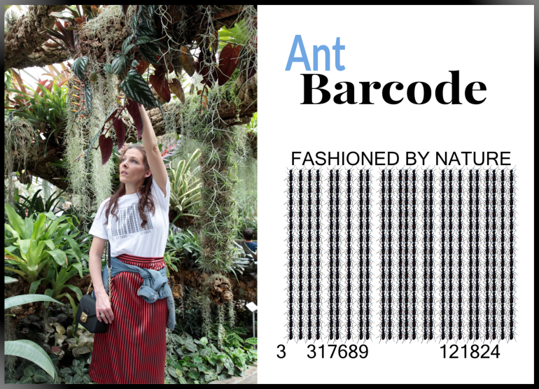 Ant Barcode Coll